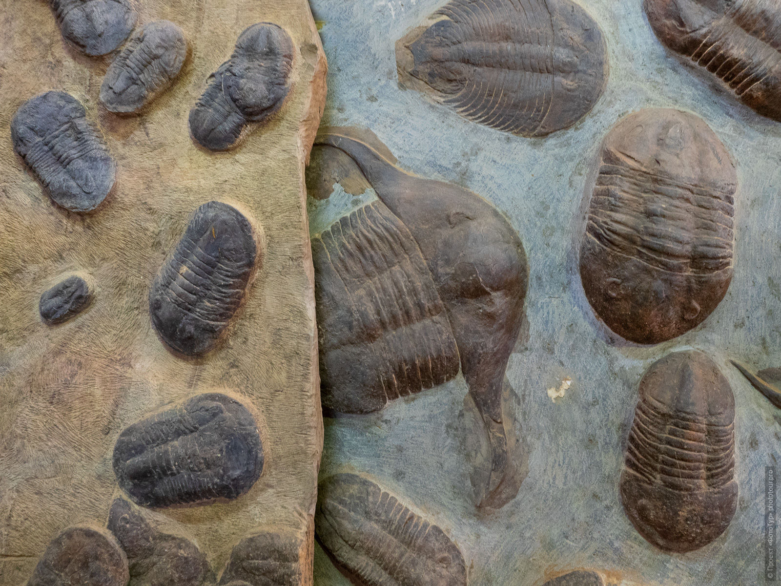 Plate with trilobites, Merzouga. Adventure photo tour: medina, cascades, sands and ports of Morocco, April 4 - 17, 2020.